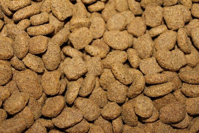 פרימייר קלאב מזון לכלבים
