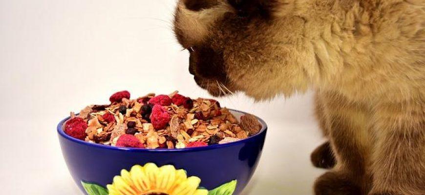 5 מאכלים שאם החתול שלכם אכל צריך לטוס לוטרינר