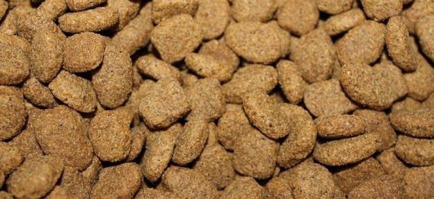 פרימייר קלאב מזון לכלבים מאושרים